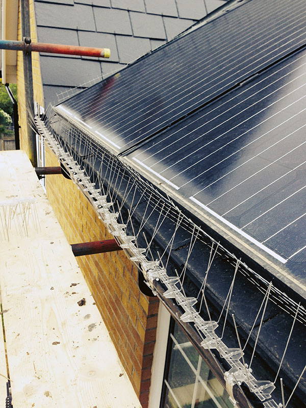 Protecting Solar Panels from Pigeons